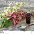 Le erbe guaritrici I 38 Fiori del Dr Edward Bach per conoscere la nostra personalità