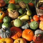 Gnocchi di zucca con pomodori e zucchine