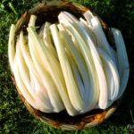 Presìdi Slow Food d'Italia: il cardo gobbo di Nizza Monferrato