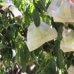 Presìdi Slow Food d'Italia: la pesca nel sacchetto