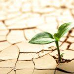 Resilienza Familiare: cosa si intende