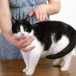 Reiki agli animali: scopri i benefici di fare trattamenti ai tuoi pelosi